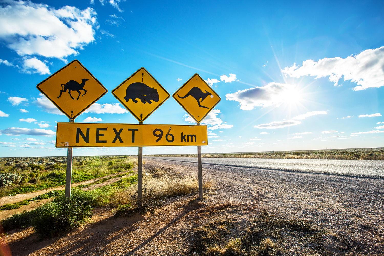 Australian Desert Animals  Australian Travel Guide