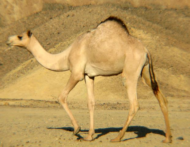 The Wildlife of Nullarbor