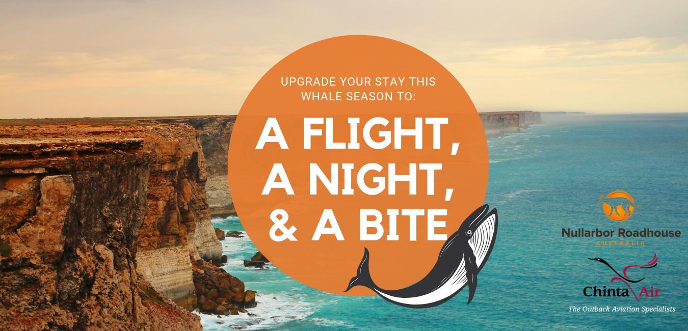 a-flight-a-night-a-bite-mobile